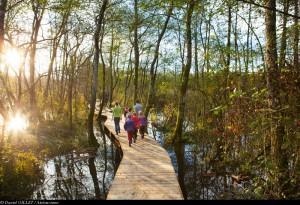 Promenade dans les Marais de Lavours, Ceyzerieux, Bugey, Ain.
